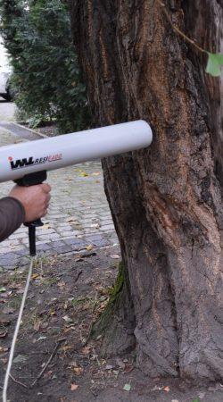 badania dendrologiczne - badanie drzewa rezystografem