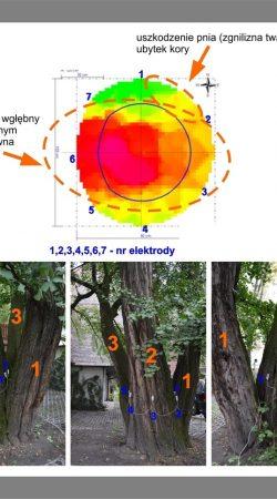 ekspertyzy dendrologiczne - badanie drzewa tomografem