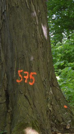 inwentaryzacja drzew kraków