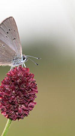 Inwentaryzacja Entomologiczna - Ochrona Środowiska