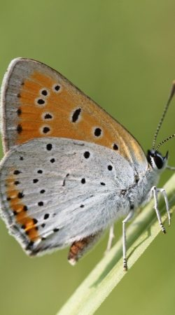 Inwentaryzacja Owadów Chronionych - Ochrona Środowiska