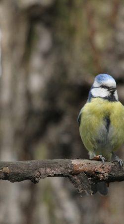 Inwentaryzacja Przyrodnicza - Ochrona Środowiska