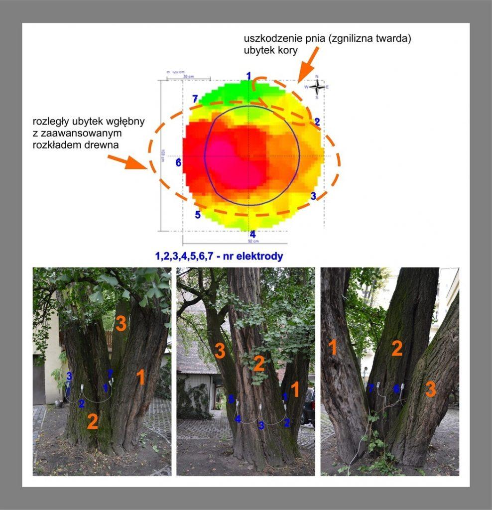 Blog For Eco - Wyniki Badania Drzewa Tomografem
