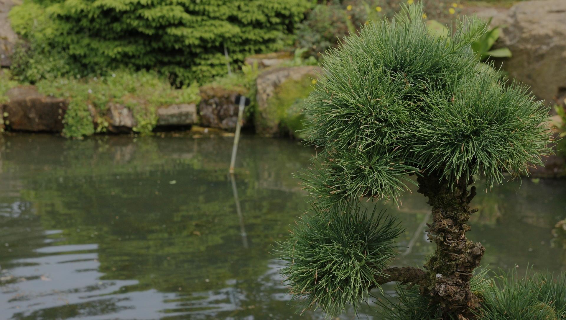 jak wybrać dobrego projektanta ogrodów - projekty ogrodów